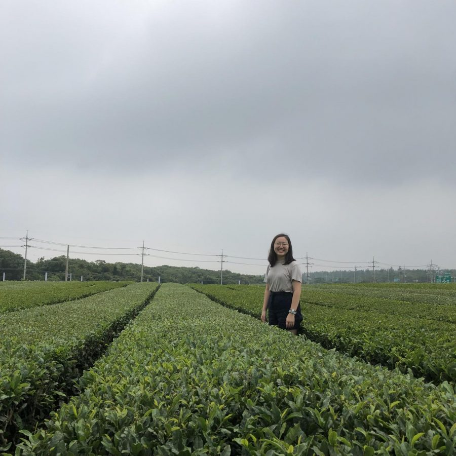 Senior Ellie Cheung visited Korea over the summer. One of her travel stops was the O'Sulloc Green Tea Field in Jeju Island. O'Sulloc is a popular Korean tea brand, and visitors flock to the field to view the source of the green tea leaves.