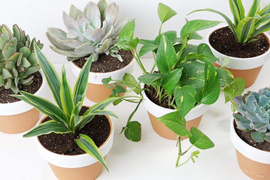 Great for cleaning indoor air, improving one's mood and adding some color to the home, growing houseplants can also help cultivate one's green thumb.